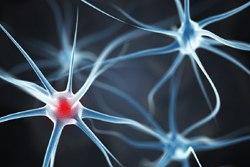 Darstellung von Nervenzellen im Gehirn